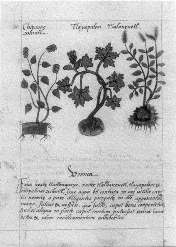 Historia de la Medicina en Yucatán: Códice Badiano