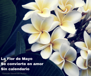 Ingenua flor de mayo