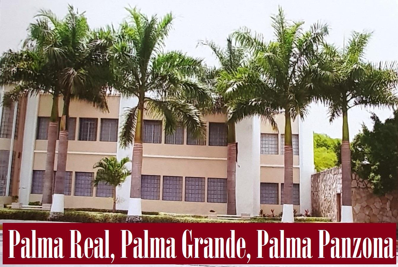 PALMA REAL, PALMA GRANDE, PALMA PANZONA