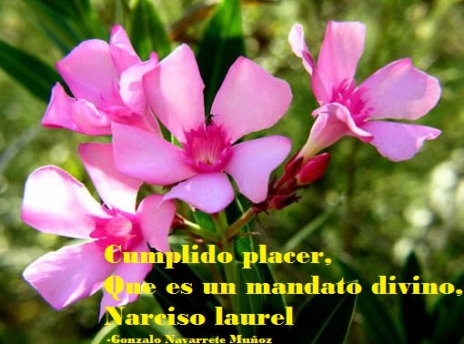 NARCISO LAUREL