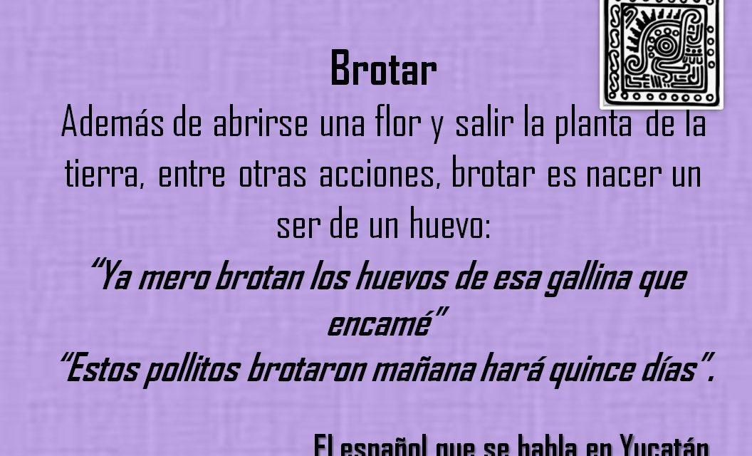 """BROTAR: """"YA MERO BROTAN LOS HUEVOS DE ESA GALLINA QUE ENCAMÉ"""""""