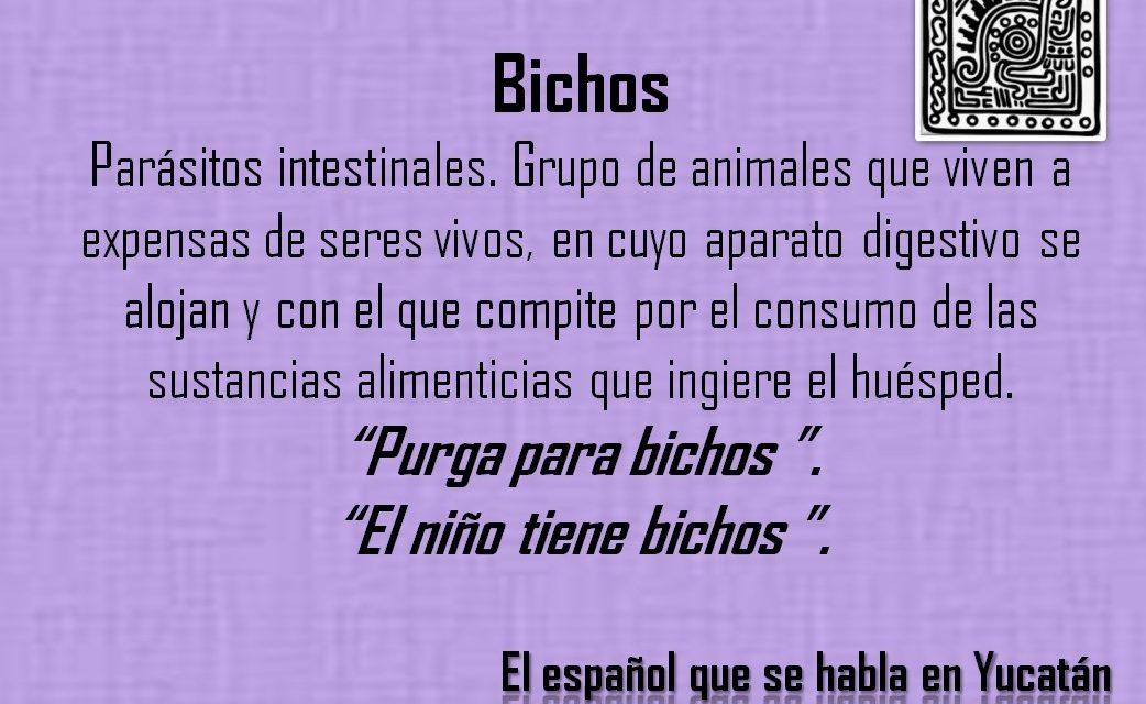 """BICHOS: """"EL NIÑO TIENE BICHOS"""""""