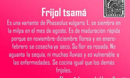 FRIJOL TSAMÁ