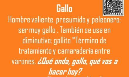 GALLO: ¿QUÉ ONDA, GALLO, QUÉ VAS A HACER HOY?