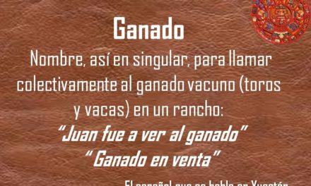 """GANADO: """"JUAN FUE A VER AL GANADO"""""""