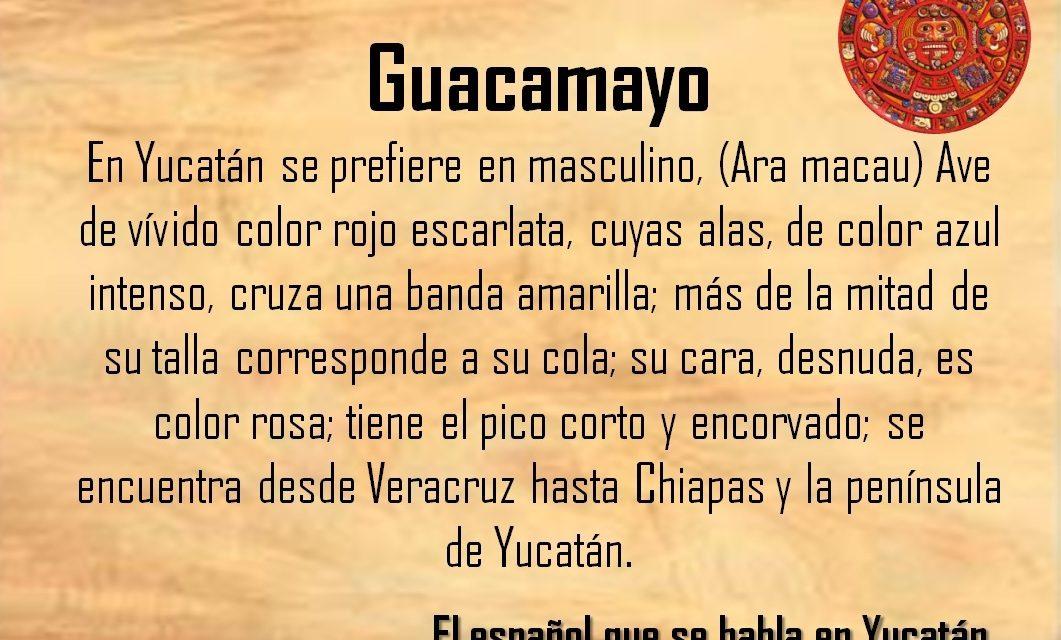GUACAMAYO: AVE DE VÍVIDO COLOR ROJO ESCARLATA