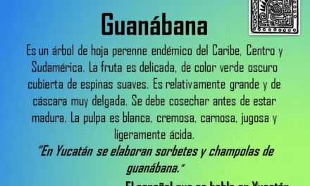 "GUANÁBANA: ""EN YUCATÁN SE ELABORAN SORBETES Y CHAMPOLAS DE GUANÁBANA"""