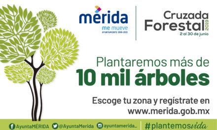 Cruzada Forestal 2019