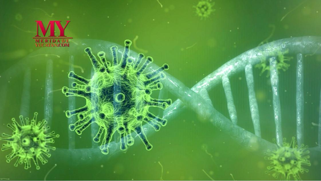 La fase 4 del Coronavirus